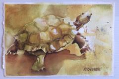 Desert-Tortoise-Watercolor-small