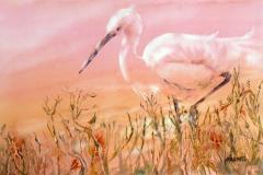 Egret in Pink - Watercolor 15x22