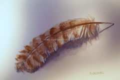 Feather Study -  Watercolor 11x15