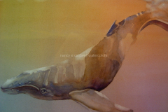 Humpback Diving - Watercolor 11x15