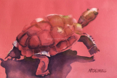 Red Tortoise - Watercolor (small)