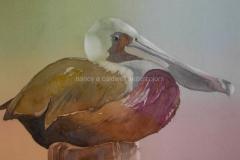 Pelican Perched - Watercolor 11x15