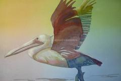 Rainbow Pelican - Watercolor 11x15