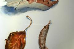 Huntington Beach Treasures - Watercolor 22x15