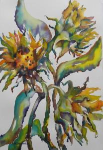 Ala Sunflowers     2100-22-HLF 1500px