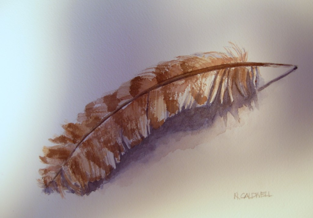 Feather Study       9000-12-QTR 1200px