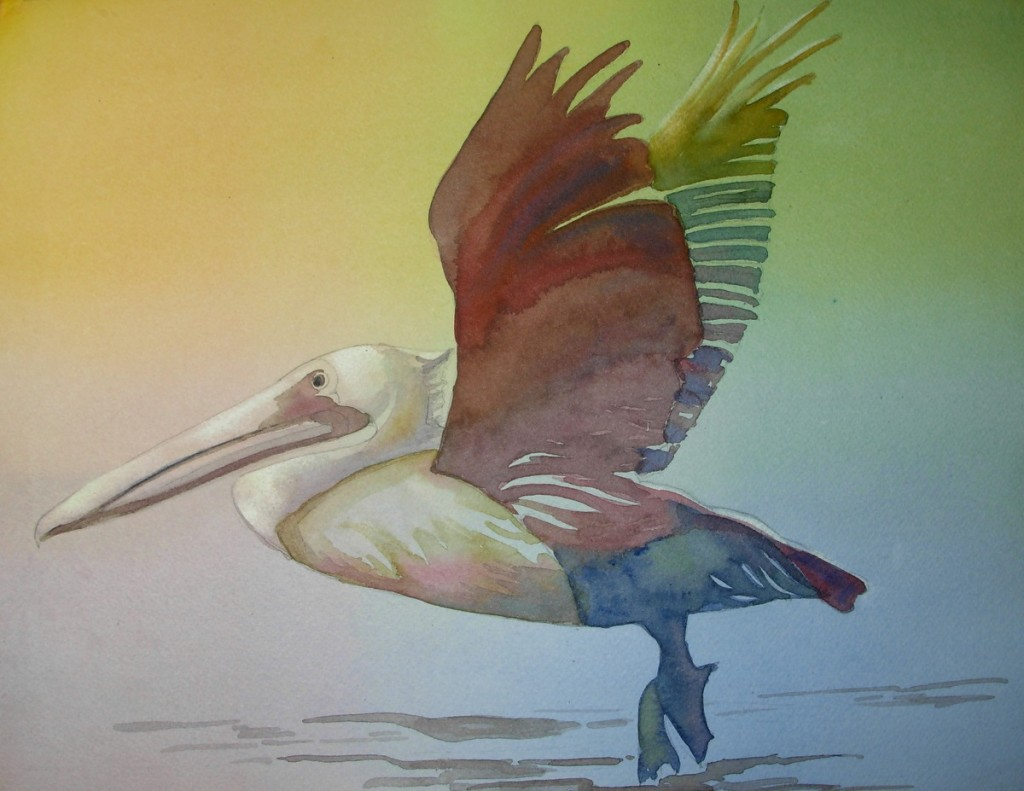 Rainbow Pelican     9000-06-QTR  1200px